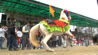 Rural Olympics - The dancing horse of Punjab | Best Of India
