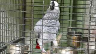 ВАУ! Попугай читает стихи лучше первоклашки!!!