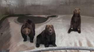 【阿蘇カドリー・ドミニオン】熊に餌やり