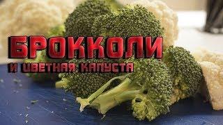 Топ 3 простых рецепта из брокколи и цветной капусты. Самые легкие рецепты