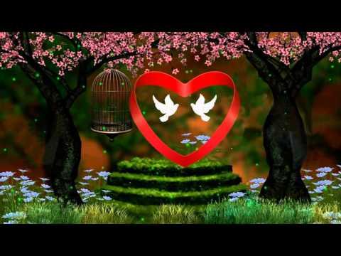 Весна...любовь...голуби... Бесплатный футаж.