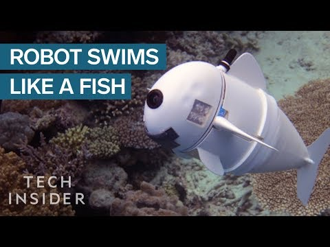 Robotic Fish Could Revolutionize How We Study The Ocean