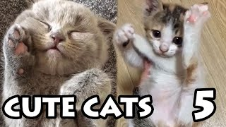 Cute Cat Videos Ep. 5 | Try Not to Cuddle Compilation 2019