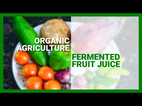 Fermented Fruit Juice (Organic Agriculture)