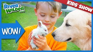 Download FARMING CHORES - BABY BUNNY RABBITS, CHICKS, PIGS, SHEEP Mp3 and Videos