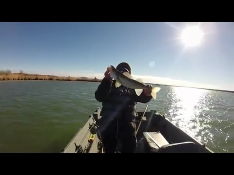 Winter Powerplant Walleye Wolf Creek Nuke KS USA xx