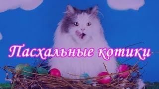 ПАСХАЛЬНЫЕ КОТИКИ  ФОТОПОДБОРКА КОТИКОВ  EASTER CATS