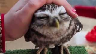 Как гладят сову???(, 2015-06-28T16:41:00.000Z)