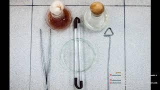 Микробиология#1 (Анатомия и морфология бактерий)