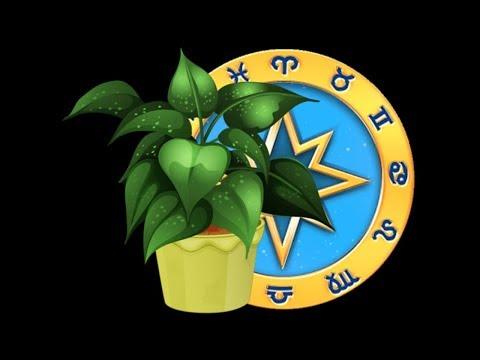 Комнатные растения по гороскопу. Каждому знаку зодиака свои цветы.