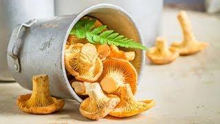 Вкусная и ароматная холодная засолка грибов