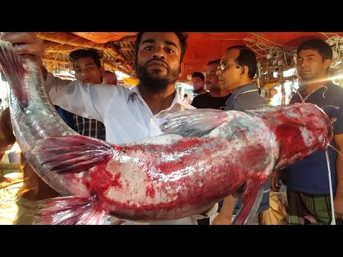 Big Long Whiskered Catfish Cut Into Chunk In Fish Market Bangladesh