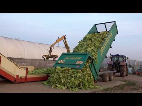 Tabacco a Nordest 2016 / Tobacco in North-East of Italy 2016