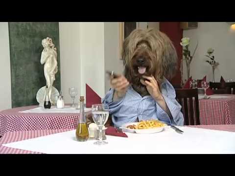 hund isst ein schnitzel youtube. Black Bedroom Furniture Sets. Home Design Ideas