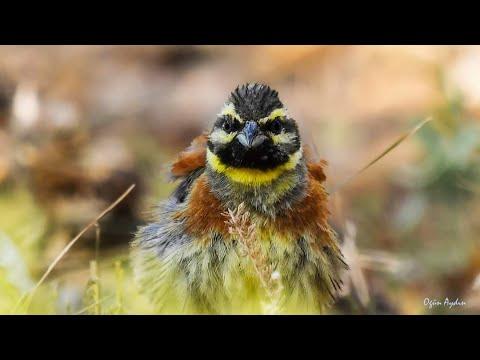 Belgesel Tadında Muhteşem Kuş Resimleri