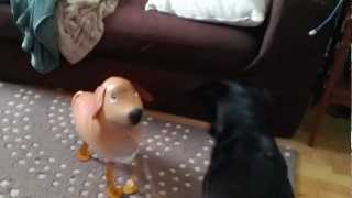 Dogs Meet The New Puppy