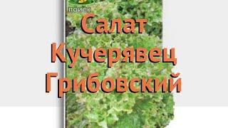 Салат обыкновенный Кучерявец Грибовский Полукочанный 🌿 обзор: как сажать, семена салата
