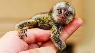 Самые необычные существа нашей планеты