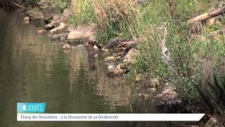 Equilibres – La biodiversité à nos pieds