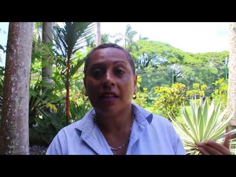 Maria Nailveu - DIVA (Pacific Women Climate Change Negotiators Workshop)