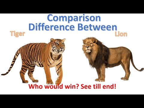 Difference between Lion and Tiger | Tiger vs Lion Comparison thumbnail