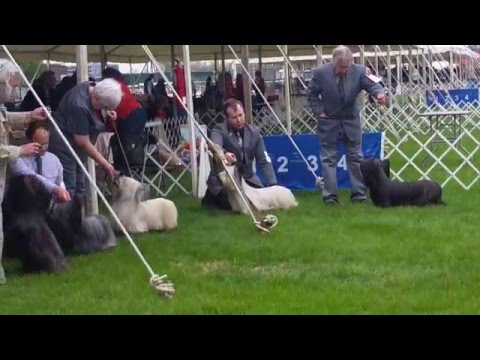 Columbia Terrier Association Of Maryland 2016 - Skye terriers BOB competition