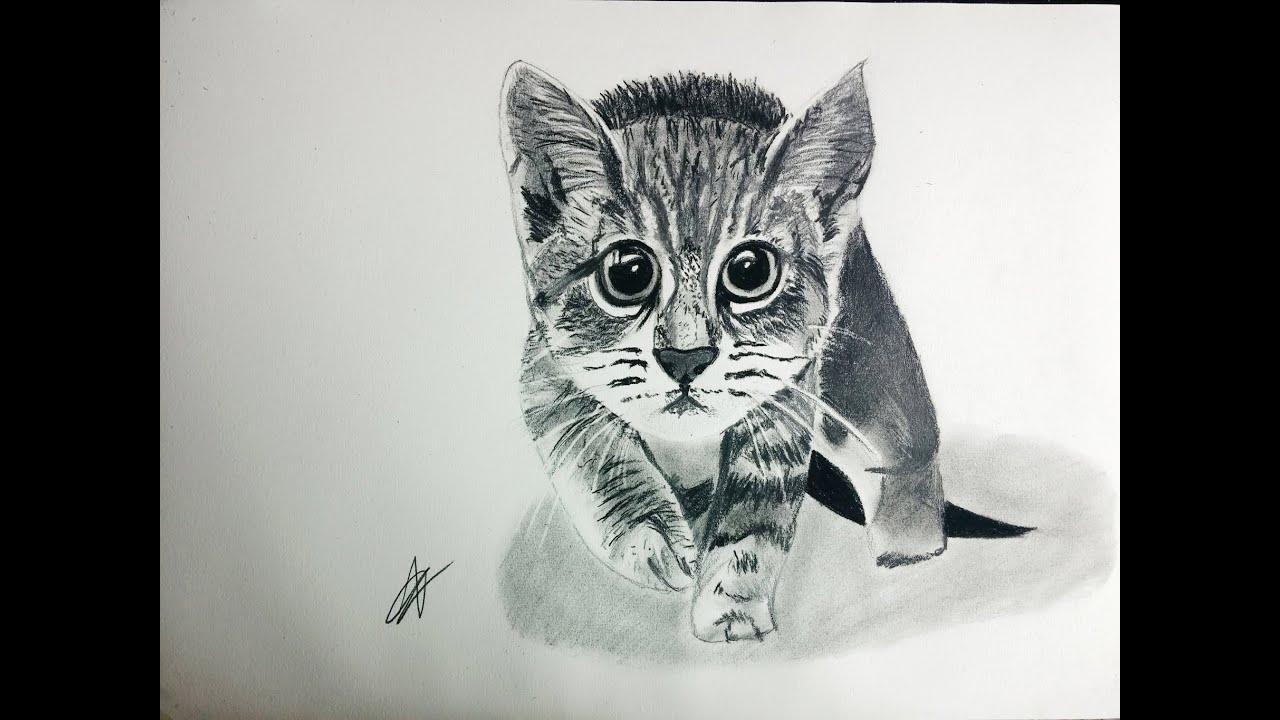 Cómo dibujar un gato realista paso a paso explicado MUY FÁCIL - YouTube
