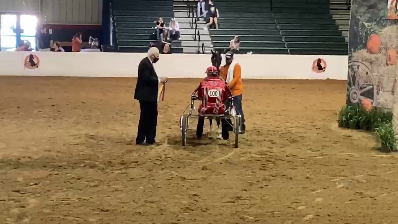 Crystal Creek's Trump Card takes the championship at Harvest Days