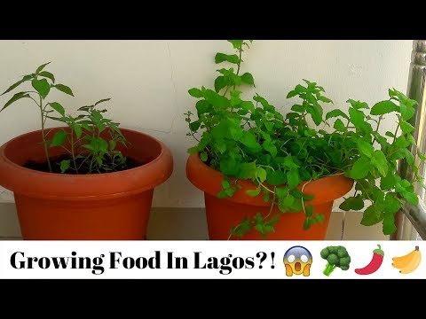 HOW TO: GROW YOUR FOOD IN LAGOS   SIMPLE DAILY ROUTINE