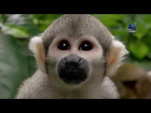 Your Inner Fish Episode 3: Your Inner Monkey