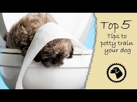 Top 5 tips to potty train your dog