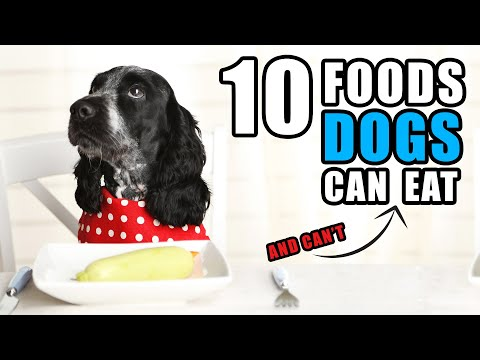 Foods Your Dog Can & Can't Eat   Talkin' Dogs List Show