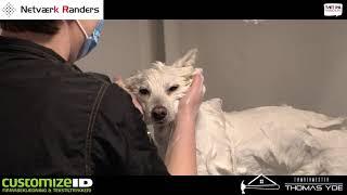 Tæt På Randers - Netes Hundesalon