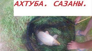 Рыбалка  Ахтуба  Сазаны