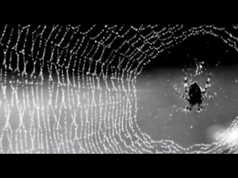 Silk - If Spiders And Worms Can Do It, Why Can't We?