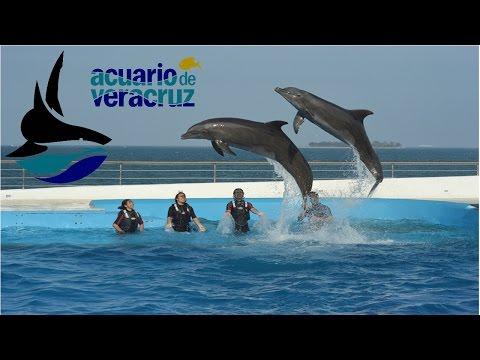 Acuario    de    Veracruz   Veracruz
