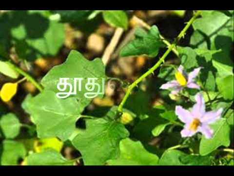 நல்ல மூலிகைகள் (Mooligaigal) 9 Tamil - YouTube