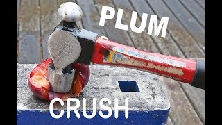 What happens when you HAMMER a PLUM   PLUM Crush