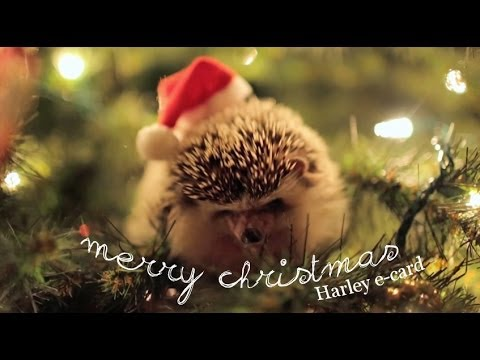 MERRY CHRISTMAS - HARLEY E-CARD