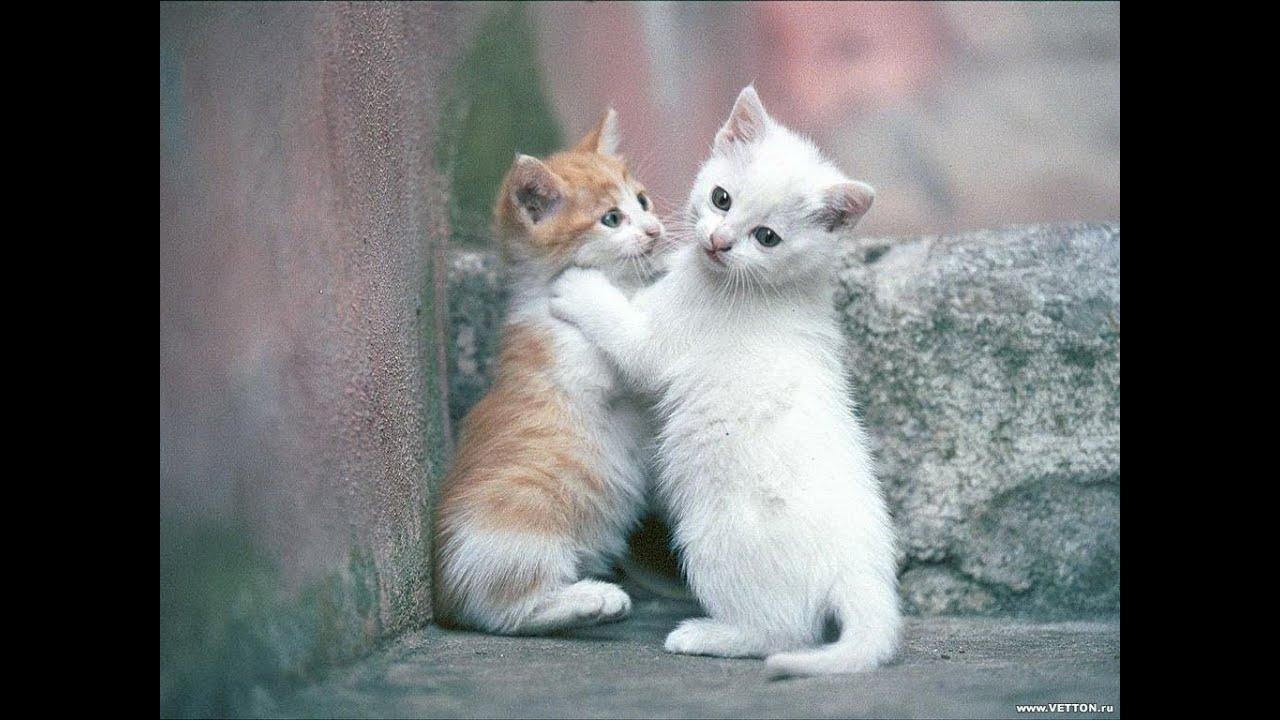 Котики Очень милое видео ))) - YouTube
