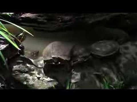 Costa Rica Zoo Visit