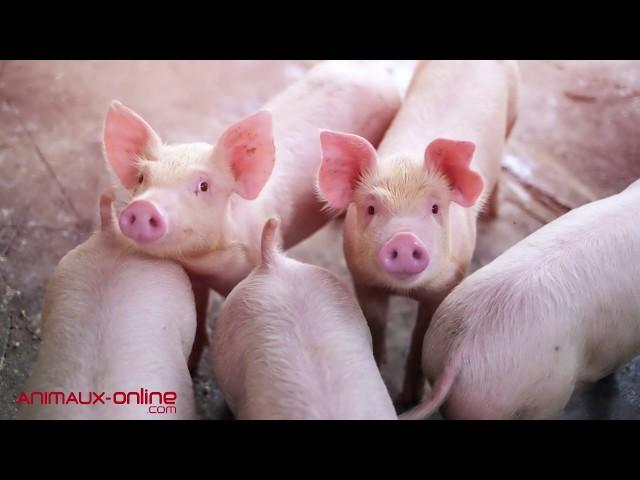 Yolaine de la Bigne : une journée pour l'intelligence animale