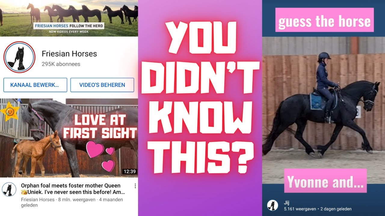You didn't know this yet! That's why I explain | Friesian Horses