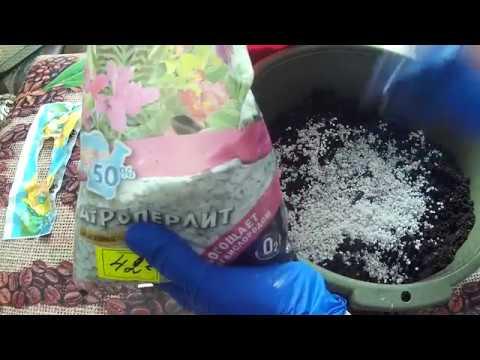 как обрабатывать почву фитоспорином перед посадкой