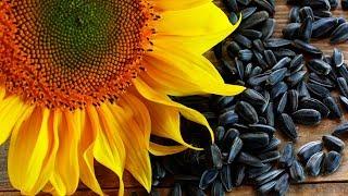 ЭСТРОГЕН - гормон ЖЕНСКОЙ МОЛОДОСТИ в растительных продуктах питания