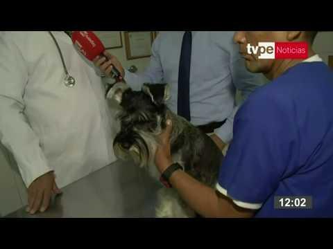 ¿Las Mascotas Pueden Transmitir El Coronavirus?