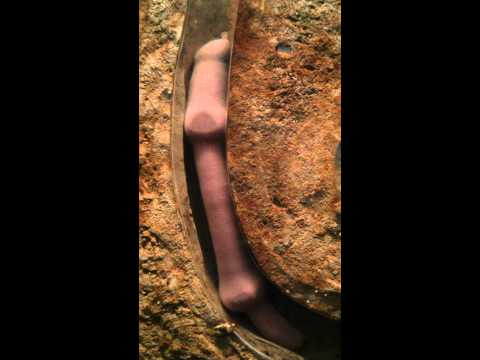 Fat innkeeper worm at the Monterey Bay Aquarium from YouTube · Duration:  2 minutes 39 seconds