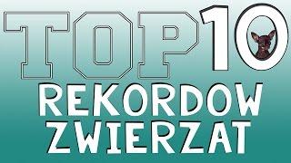 Ciekawostek - Top 10 Najlepszych rekordow zwierzat !