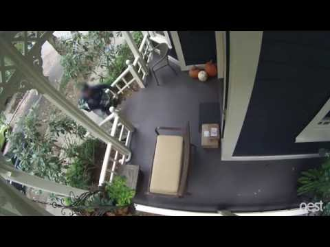 Nest Cam | Package thief caught red handed.