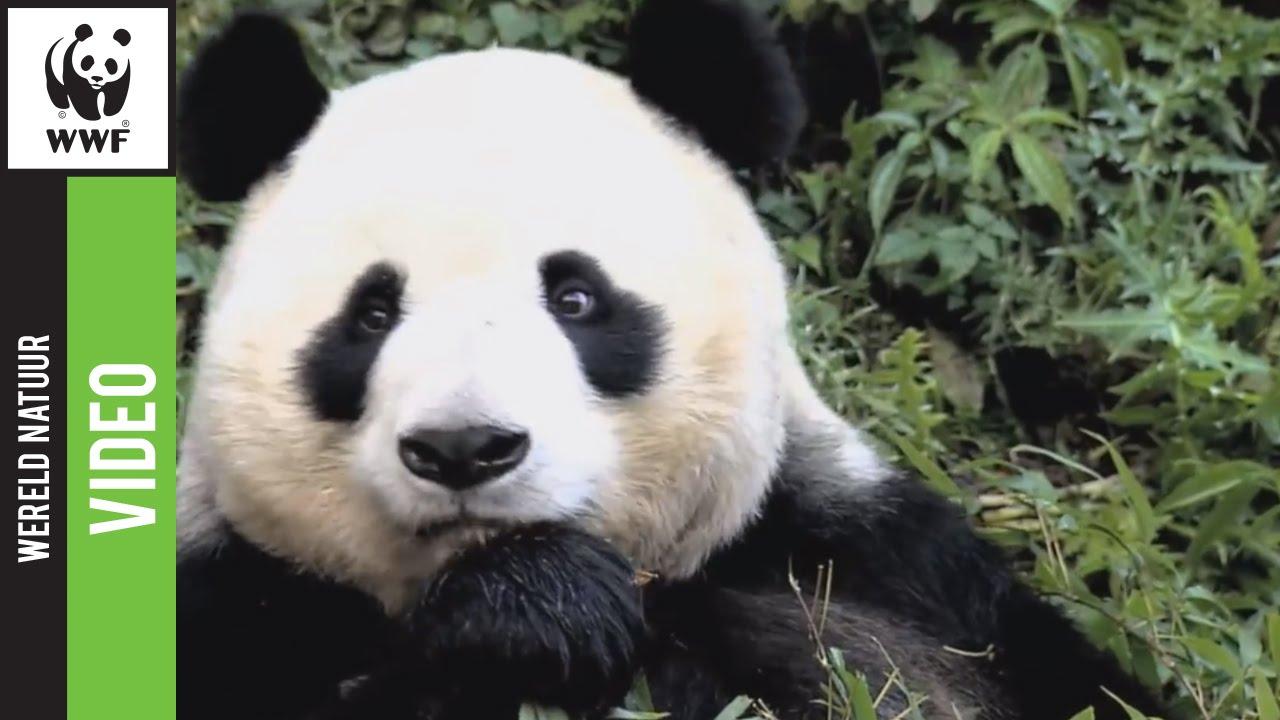 WNF  Rangers, ook jij kunt wilde dieren beschermen   YouTube